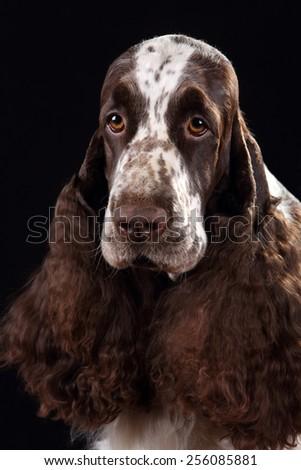 Sad dog, portrait - stock photo