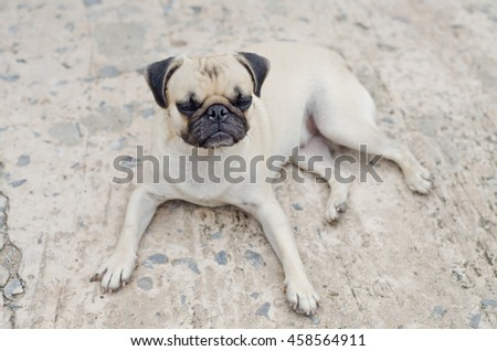 Sad dog waiting.Very sad dog. Sad border Terrier. Clever dog. The dog is sick and misses his owner. Terrier needs trimming. - stock photo