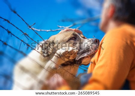 Sad dog with clutches on barbed wire fence, human hand it pampers, best friends. Shallow depth of field. - stock photo