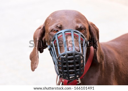 Sad dog with protection mask.Selective focus on the doge nose - stock photo