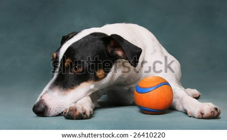 sad dog with toy ball - stock photo