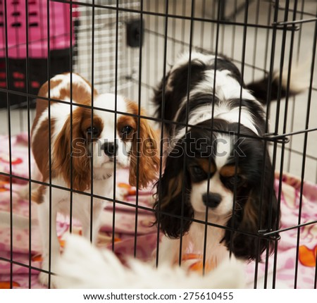 Sad dogs in a cage, looking at another dog outside, square image - stock photo