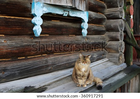Sad domestic female cat sitting on the zavalinka of a very old log house in the remote Russian village - stock photo