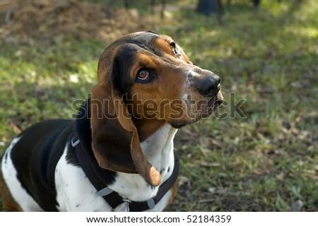 Sad eyed dog - stock photo