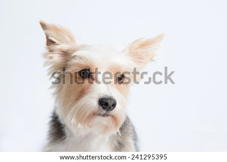 Sad funny puppy on light gray background