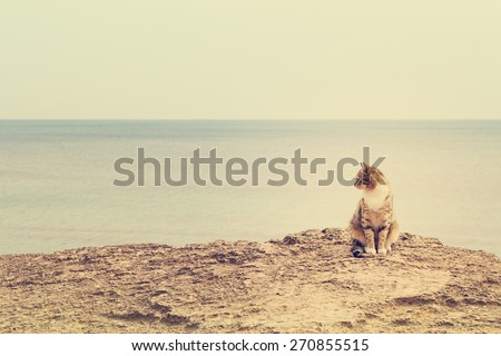 Sad homeless cat sitting on the beach. The image is tinted and selective focus. - stock photo