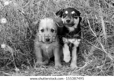 Sad homeless puppies looking in the eyes. B&W - stock photo