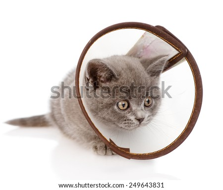 sad kitten wearing a funnel collar. isolated on white background - stock photo