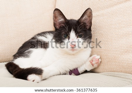 Sad kitty or cat with broken leg sitting relaxed on the couch
