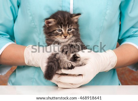 Sad little kitten on hands at the veterinarian