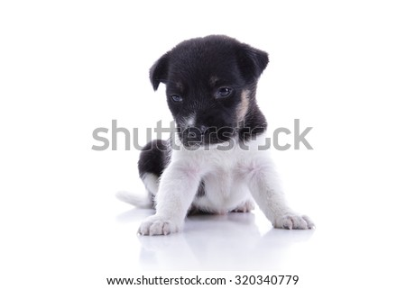Sad little puppy sitting and looking down, isolated on white background - stock photo