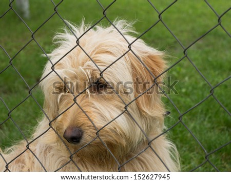 Sad lonely dog behind fence - stock photo
