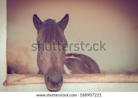 Sad looking brown horse inside the cell - stock photo