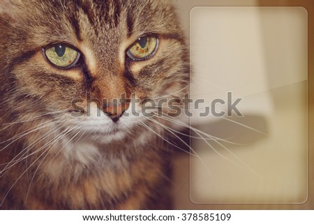 sad looking cat retro style with copy space - stock photo