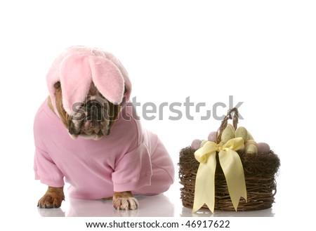 sad looking english bulldog dressed up as easter bunny sitting beside basket with eggs