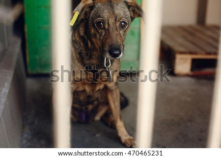 Stock photos royalty free images vectors shutterstock - Dogs for small spaces concept ...