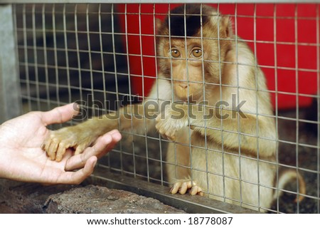 Sad Monkey Caged - stock photo