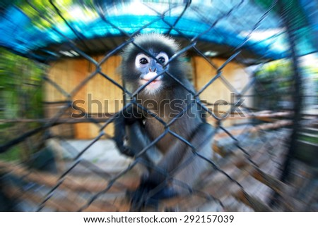 Sad monkey in the cage. Motion effect. Focus on eyes. - stock photo