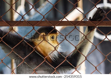 Sad monkey trapped in the cage at a zoo.