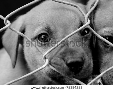 Sad pup looking out from behind the wire mesh of her pen - stock photo