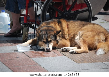 sad puppy - stock photo