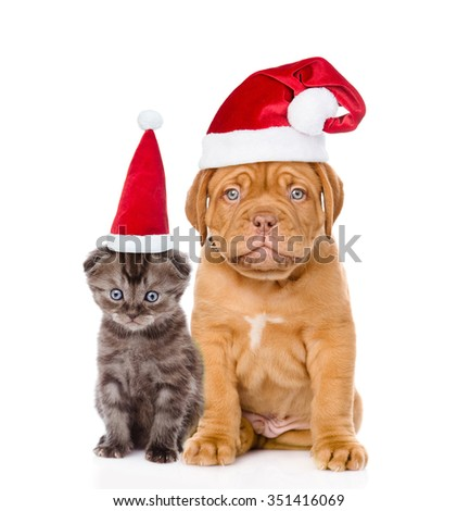 Sad puppy and small kitten in red santa hats sitting together. isolated on white background.