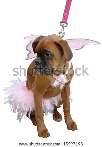 sad puppy-dog with pink wings - stock photo