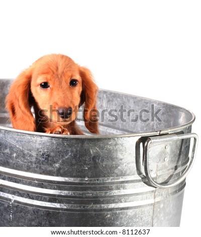 Sad puppy in a tub - stock photo
