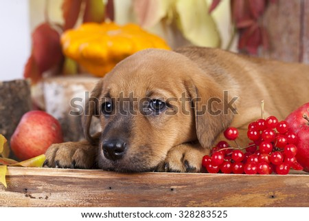 sad puppy waiting - stock photo