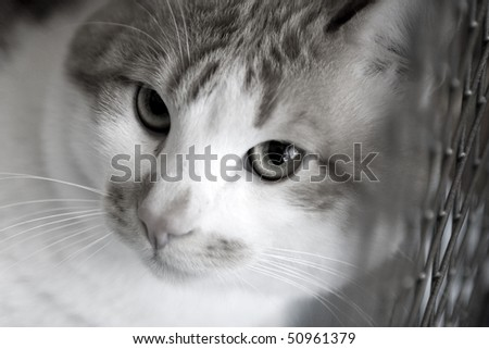 Sad red cat breeds bobtail in a cage