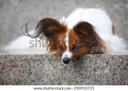 Sad small dog lying on a stone bench - stock photo