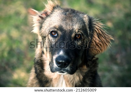 Sad stray dog posing on autumn park  - stock photo