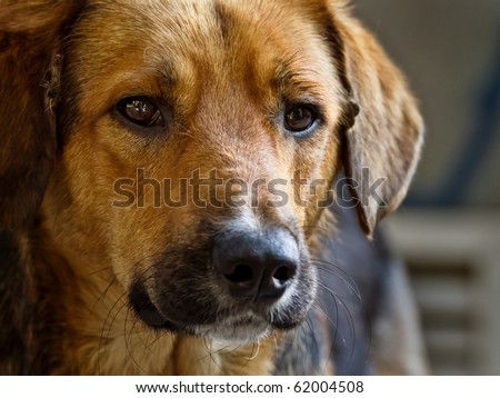 Sad stray dog posing on the street - stock photo