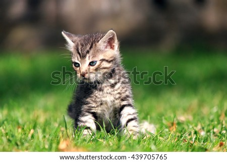 Sad striped kitten sitting on green grass, looking away from the camera (image 2 from 3)