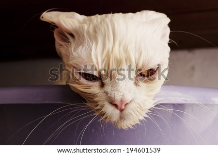 Wet Sad Cat Stock Images, Royalty-Free Images & Vectors ...