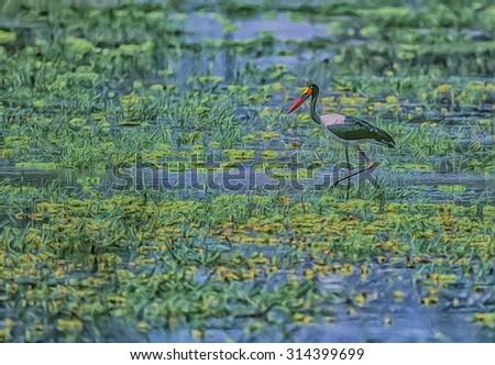 Saddlebill stork hunting in Zambia swamp - stock photo