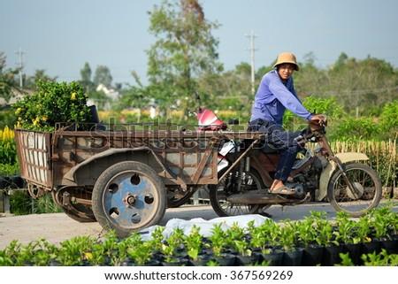 SADEC, VIETNAM - JAN, 2016 : Unidentified man is preparing for flower harvest for Lunar New Year sale. Sadec Flower Village (Tan Qui Dong) supply flowers for Southern area of Vietnam.