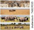 safari - stock photo