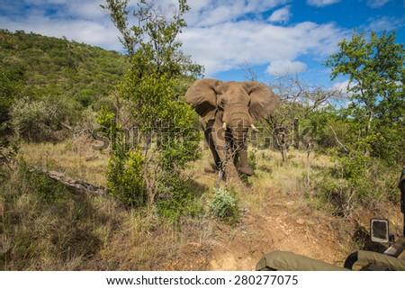 Safari game drive at Mzkuze Falls - South Africa - stock photo