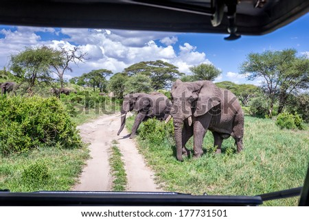 Safari Game drive in Tarangire National Park ,View from the roof of the car  ,Tanzania  - stock photo