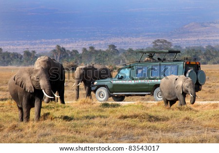 safari game drive with the elephants, masai mara  reserve in kenya, Africa - stock photo