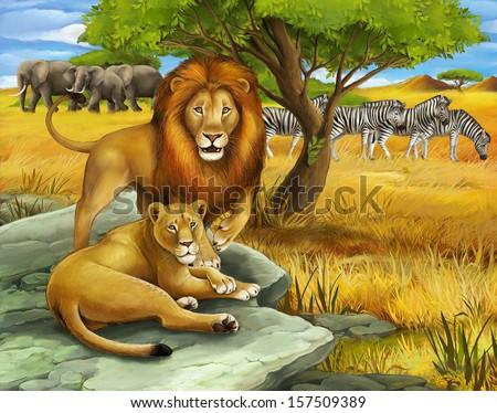 Safari - lion - illustration for the children - stock photo