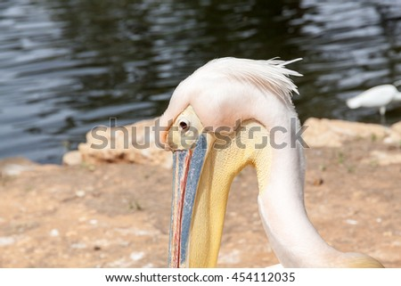 Safari visit on weekend.Close up on White pelican's face - stock photo