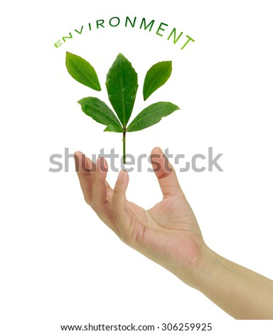 Safe the environment. female hand holding leaves and tree protecting the environment.