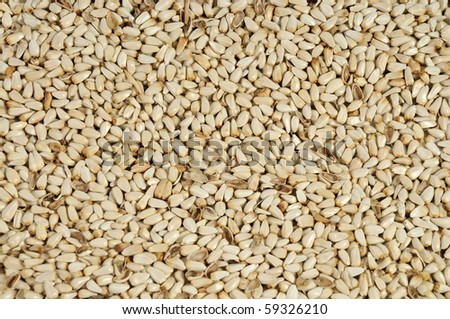 Safflower seeds close up as background - stock photo
