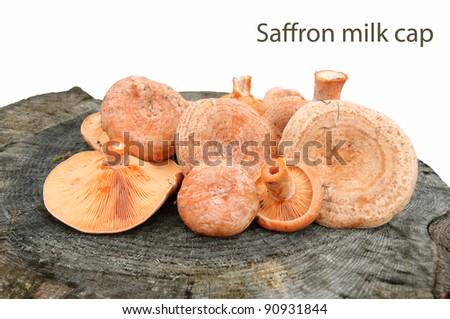 Saffron milk caps (Lactarius deliciosus) on a stump - stock photo