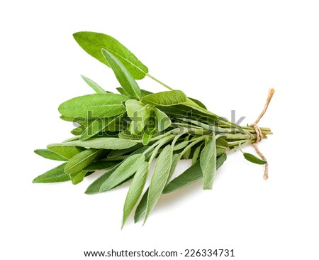 Sage bunch with cord isolated on white background - stock photo