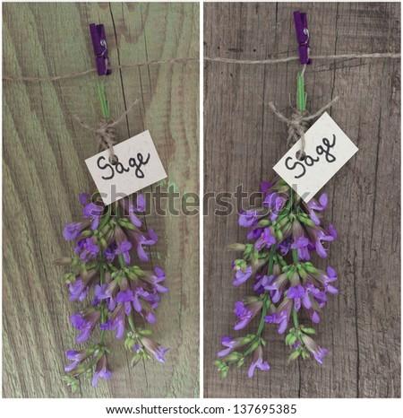 sage flower - stock photo