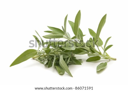 sage herb of the field reflected on white background - stock photo