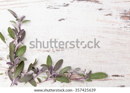 Sage herb on white wooden rustic background with copy space. Alternative herbal medicine background with copy space. - stock photo